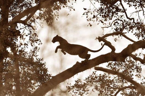 تصاویر فوق العاده از National Geographic 2011 (5)