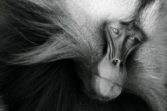 تصاویر فوق العاده از National Geographic 2011 (14)