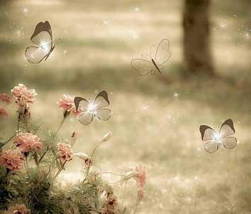 پروانه عاشق