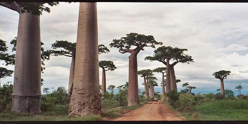 Morondava-in-Madagascar