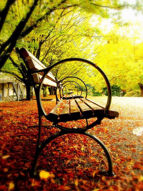 نیمکت تنها در برگ ریزان پاییز