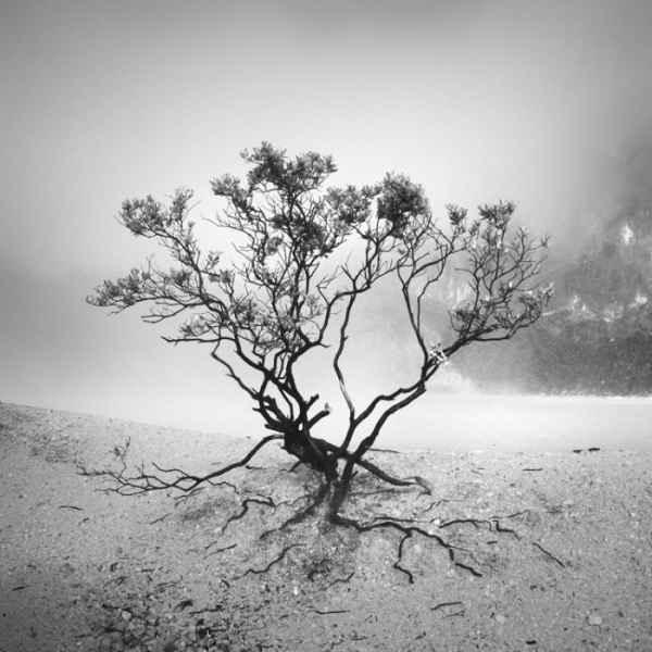 تصاویر سیاه و سفید شگفت آور (5)