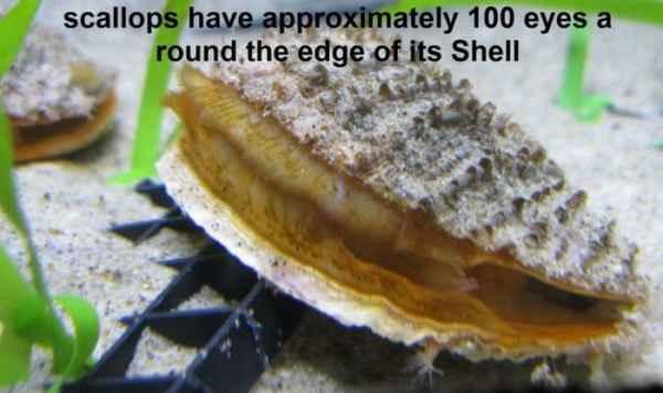 حلزونهای دوکپه ای حداقل 100 چشم در اطراف پوسته خود دارند