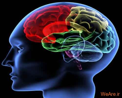 مغز انسان و حواس پنج گانه
