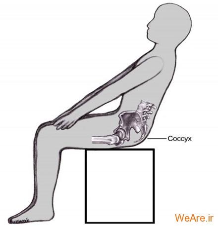 استخوان دنبالچه (Coccyx the Tailbone)