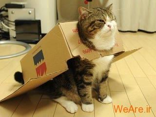 هواپیمای گربه ای