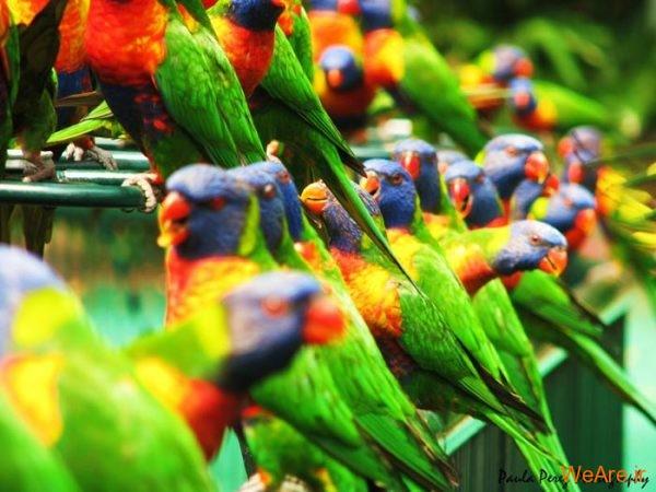 پرندگان رنگی زیبا (1)