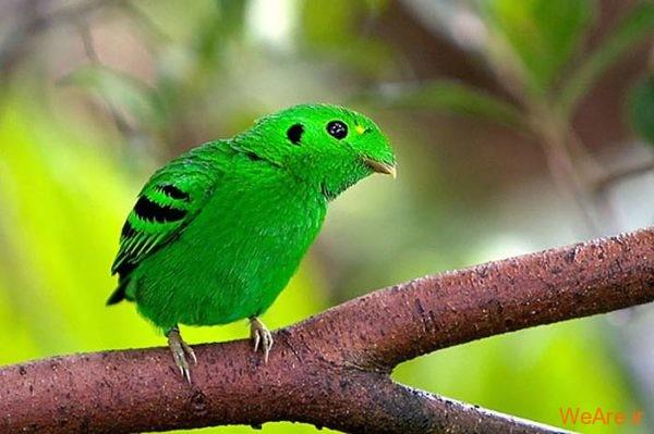 پرندگان رنگی زیبا (3)
