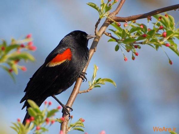 پرندگان رنگی زیبا (5)