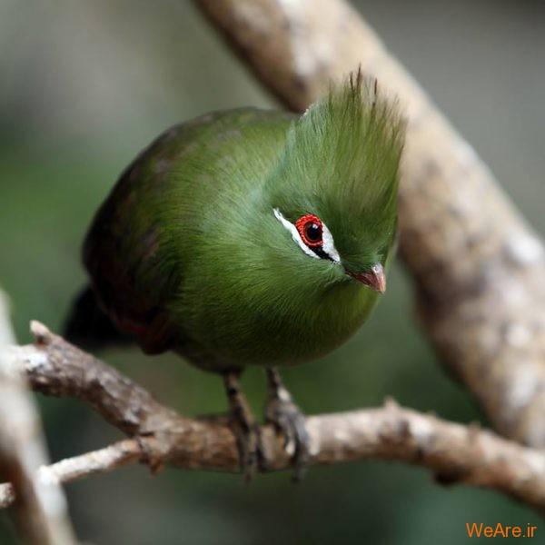 پرندگان رنگی زیبا (14)