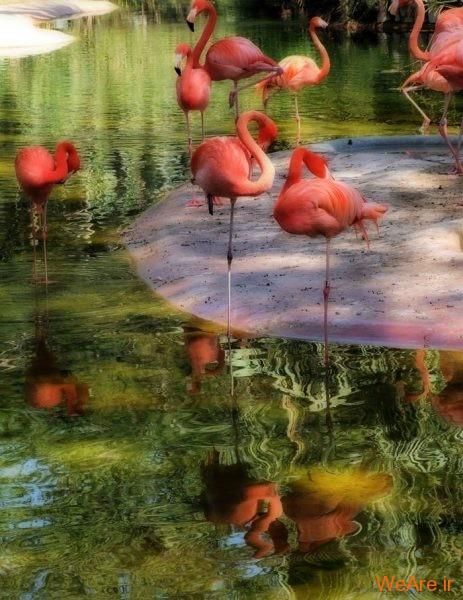 پرندگان رنگی زیبا (15)