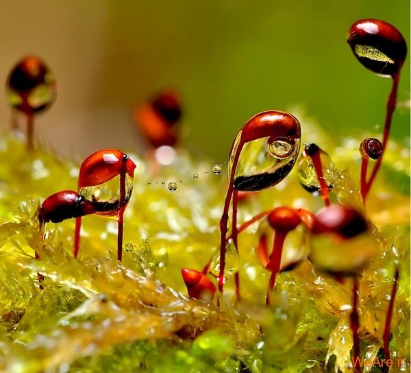عکس طبیعت,عکس باران (15)