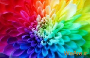 گل-رنگ