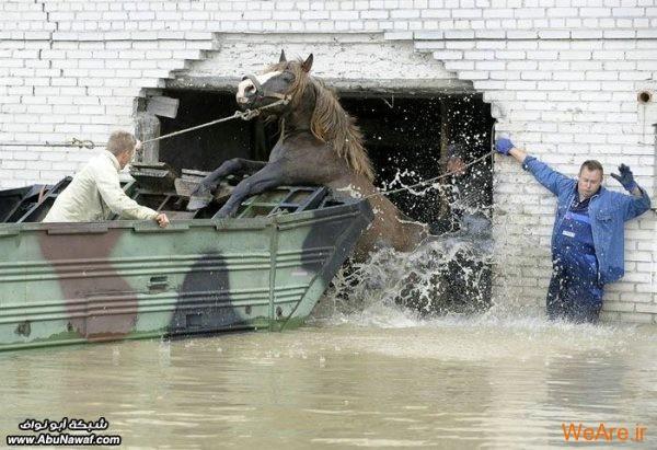 عکس برگزیده خبری از خبرگزاری ابونواف (28)