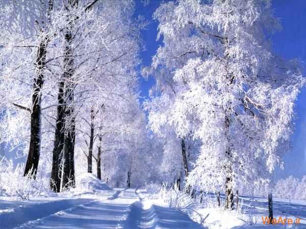 عکس زمستان و برف (5)