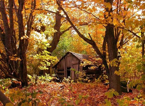 تصاویر پاییز, عکس پاییز (17)