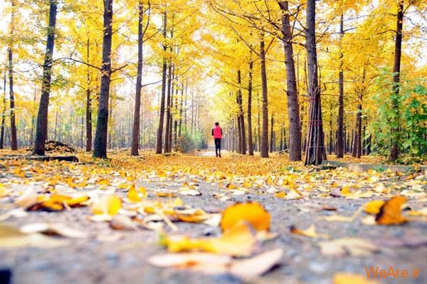 تصاویر پاییز, عکس پاییز (12)