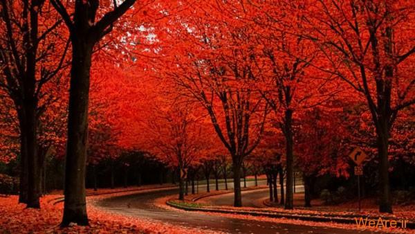 تصاویر پاییز, عکس پاییز (10)