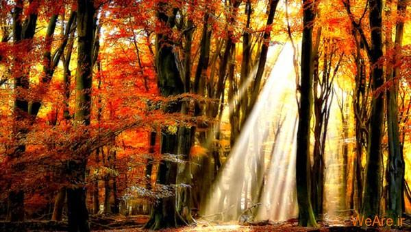 تصاویر پاییز, عکس پاییز (9)