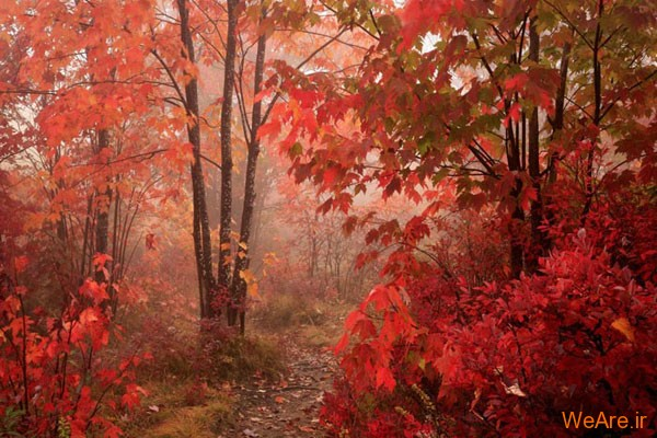 تصاویر پاییز, عکس پاییز (6)