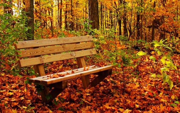 تصاویر پاییز, عکس پاییز (2)