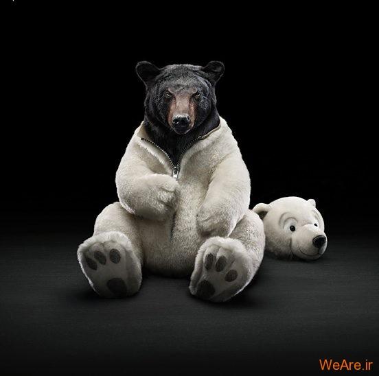 تصاویر خلاقانه، در لباس خرس