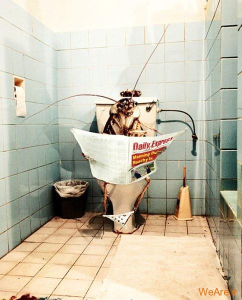 تصاویر خلاقانه، سوسک در دستشویی
