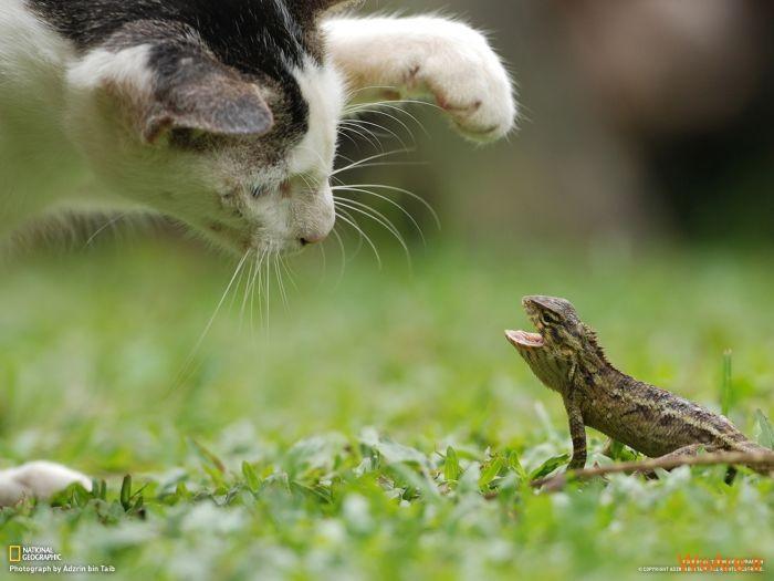 عکس حیوانات، تصاویر نشنال جئوگرافیک (10)