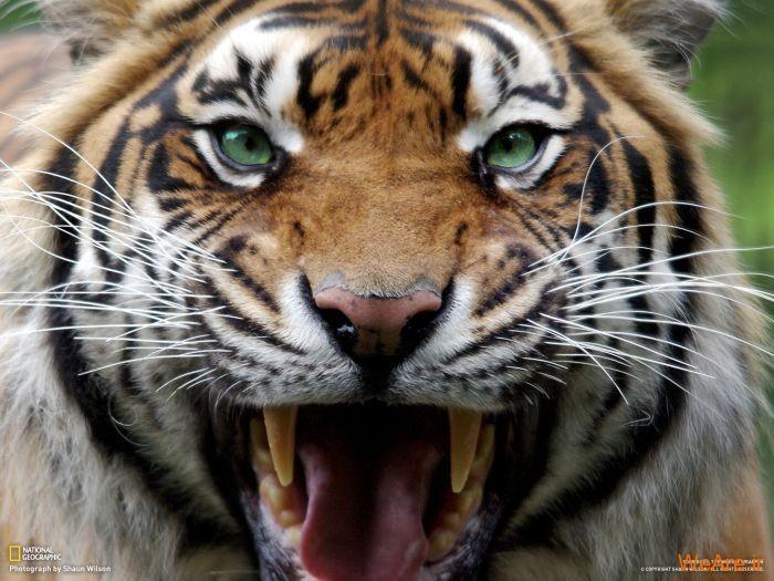 عکس حیوانات، تصاویر نشنال جئوگرافیک (23)