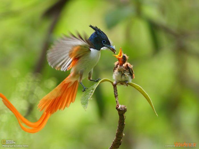 عکس حیوانات، تصاویر نشنال جئوگرافیک (27)