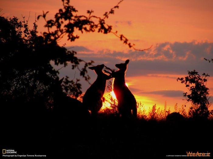 عکس حیوانات، تصاویر نشنال جئوگرافیک (34)