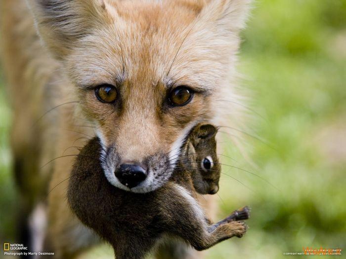 عکس حیوانات، تصاویر نشنال جئوگرافیک (44)
