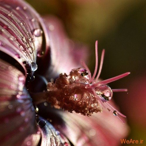 عکس گل های زیبا (14)