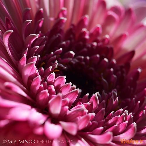 عکس گل های زیبا (4)