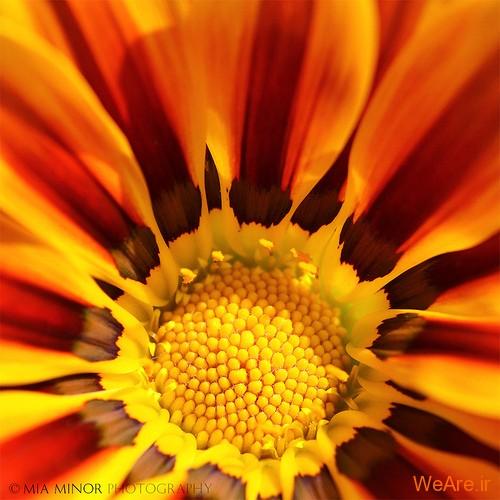 عکس گل های زیبا (6)