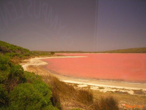 دریاچه صورتی (3)