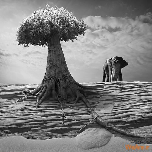 تصاویر سورئال,surreal (11)