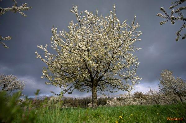 تصاویر برگزیده از طبیعت (2012) (13)