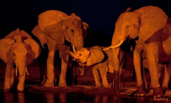 تصاویر برگزیده از طبیعت (2012) (20)