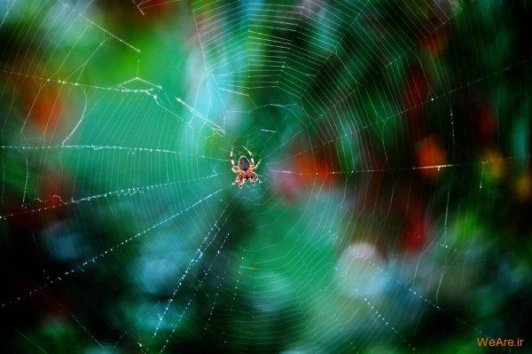 تصاویر برگزیده از طبیعت (2012) (22)