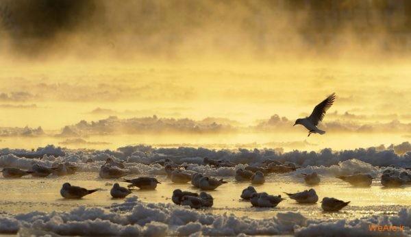 تصاویر برگزیده از طبیعت (2012) (3)