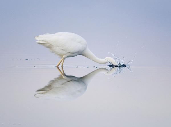 انعکاس عکس در آب, انعکاس تصویر در آب (5)