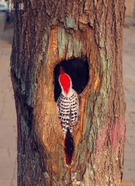 نقاشی روی درخت (10)