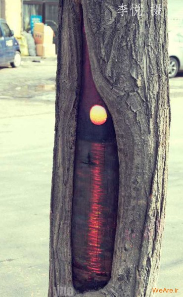 نقاشی روی درخت (4)