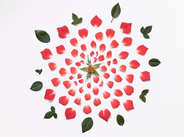 گل های پرپر (3)