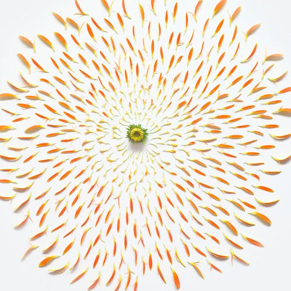 گل های پرپر (9)