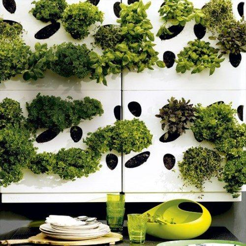 گیاهان دارویی (7)