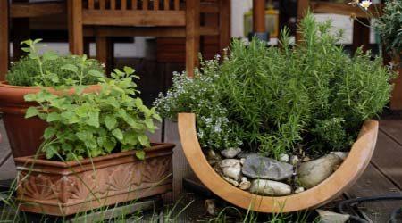 گیاهان دارویی (8)
