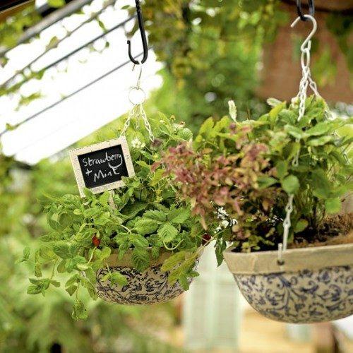 گیاهان دارویی (11)
