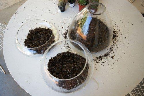گیاه خاک